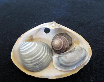 Tiny treasure shell with blue gray motif