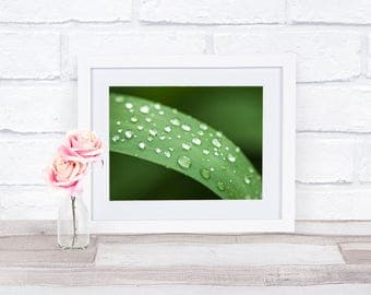 Green Leaf, Macro Photography, Water Droplet, Nature Photography, Nature Print, Zen Wall Art