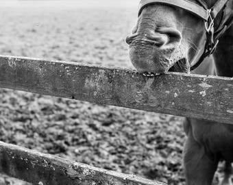 Black and White Photographic Print // Horse // Wall Art