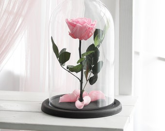 Beauty and the beast rose, Enchanted Rose, Rose in glass dome, Forever rose, Rose in Glass, preserved rose, Forever pink rose, Belle rose