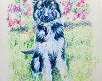 Custom Pet Portrait, Custom Colored Pencil Portrait