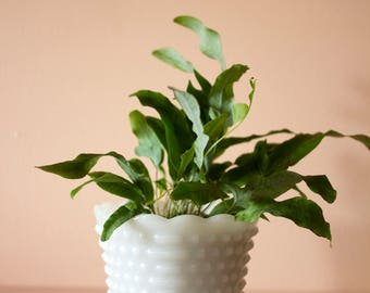 White Milk Glass Planter