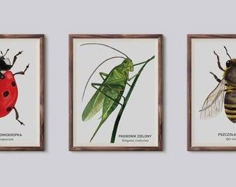 Zestaw owadów, Set of bugs - illustration - print