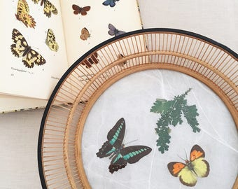 Vintage Pressed Butterfly & Bamboo Tray - Bohemian Boho Jungalow Eclectic Style Decor Home - rattan wicker natural history basket wall #0712