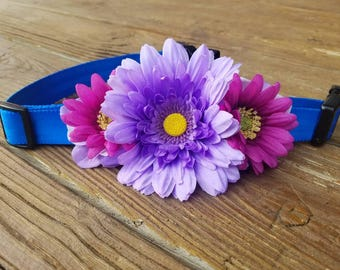 Approach-A-Bull dog collar, unique floral designs