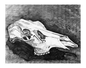 Desert Deer Skull