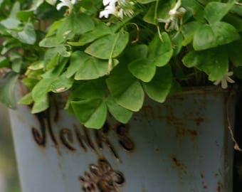 Vintage Sap Bucket Envelope planter