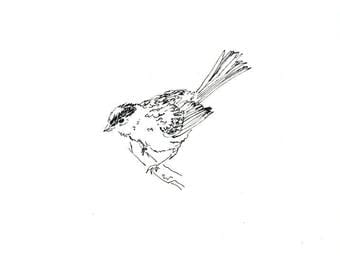 Sketchbook Sale - Bird #18 Original Ink Line Drawing - 8x10 Songbird Original Art