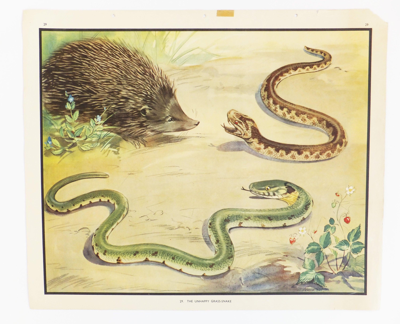 Dorm decor, Enid Blyton poster, Classroom Decor, Grass-snake School ...