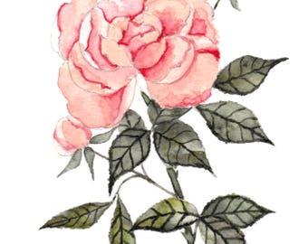 Watercolor Floral - Vintage Peach Rose
