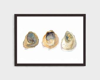 Oyster Shell Print, Oyster Illustration, Ostrea angasi, Coastal Wall Decor, Australian Shell Art, Minimalist Beach Print