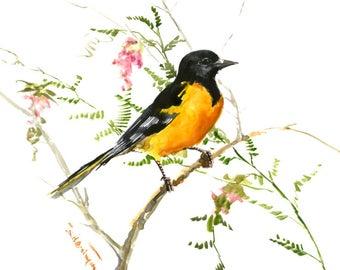 Baltimore Oriole, bird artwork, original watercolor, oriole bird, yellow black wall art, birds, birds of america, birds and flowers