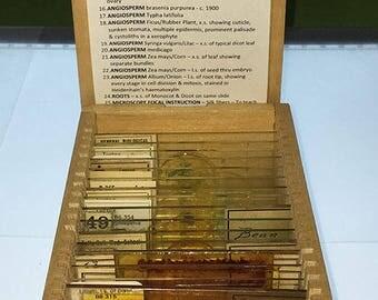 TURTOX BOTANY SLIDES General Plant Study Vintage Microscope Botanical Set Antique in Wood Case