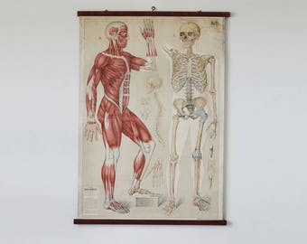 Vintage school poster, anatomy, human body, skeleton, school chart, retro