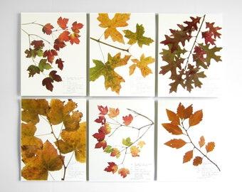 Fall Leaves Print Set, 217b 218a 222a 220 217a 219, set of 6 prints 8x10 11x14 pressed plant art autumn home décor botanical print fall art