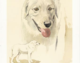 white Kuvasz Hungarian lifestock dog breed portrait vintage print illustration gift for dog lover owner by Willy E. Bär 8x11.5 in