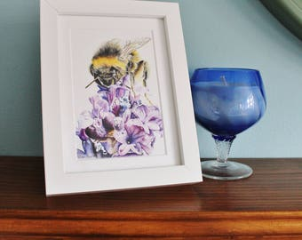 Bumblebee on Lavender Watercolour Painting - Insect - Framed print - Nature Art Poster - Picture and gift for the home