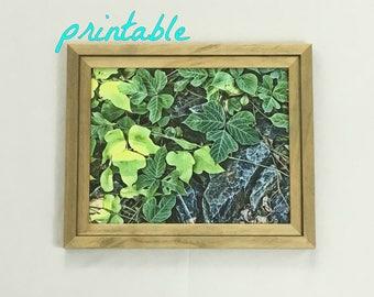 Printable Botanical Wall Art Green Leaf Print Leaves Print Instant Download Plant Art Vines Digital Download Nature Print Nature Photography