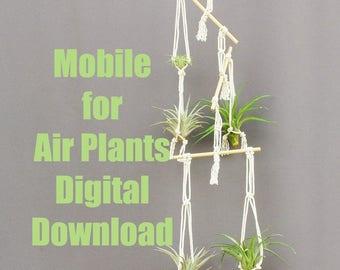 Air Plant Hanger Tutorial, Macrame Tutorial,  Macrame PDF, Macrame, Macrame Pattern, DIY Plant Hanger, Plant Hanger Digital Download