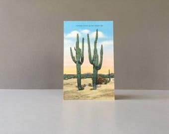 Vintage Linen Cactus Post Card, Saguaro Cactus, Sahuaro Cactus, Desert Scene