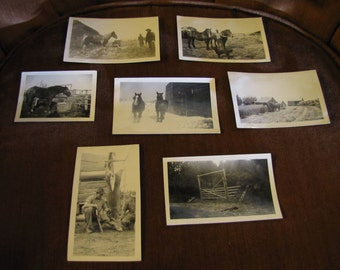 Vintage Set 7 Photographs w Animals & People - Horses, Dogs, Barns, Deer Carcass, Stables, Gates, Rustic Country Scenery Black and White
