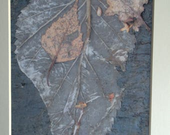 Autumnal Leaves Mounted Photographic Print 9 x 7 inches. Leaves, Wood, Tree Bark, Wall, Art, Home, Office Decor