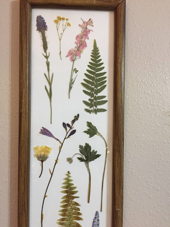 Botanical Sampler- Pressed Flower Art- Framed Botanical Art- Vintage Framed Botanical - Purple & Green- Botanical