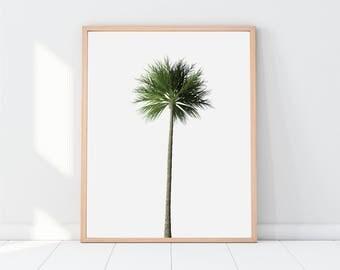 Palm Tree, Palm Tree Print, Palm, Palm Print, Palm Trees, Palm Tree  Poster, tree, tropical print, digital download, printable women gift