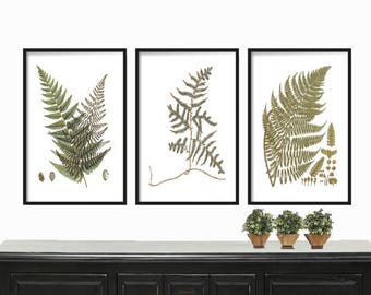 Vintage Ferns Print  - Botanical Print - Farmhouse Print - Antique Botanical Fern - Posters - Wall Art - Fern Print Set - Tropical Print Set