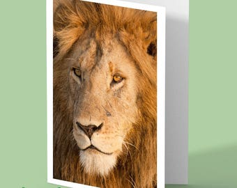 Lion blank greeting card - personalised card - personalised card - male lion photo - lion photograph photo - any occasion card