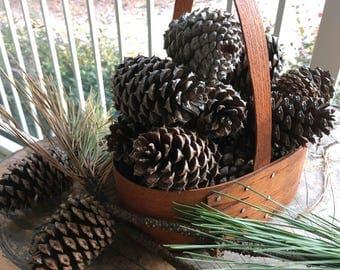 """4""""-5"""" Georgia Loblolly Pine Cones"""