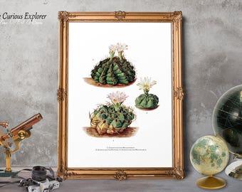 Desert Cactus Art, Cactus Wall Decor, Succulents Posters, Desert Wall Hangings, Cacti SouthWest Art, Succulent Flower Art - E8g73