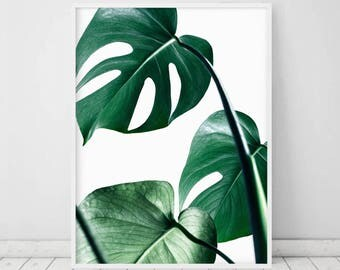 Monstera Print • Monstera Leaf Botanical Wall Art Leaf Printable Green Plant Print Minimalist Poster Scandinavian Wall Art Digital Art Plant
