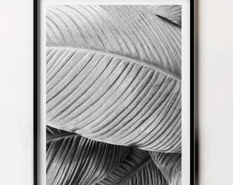 Plant Leaf Art Print, Top selling tropical, Tropical Leaves, Tropical Nature Photography, Botanical Art Photography, Botanical Wall Decor