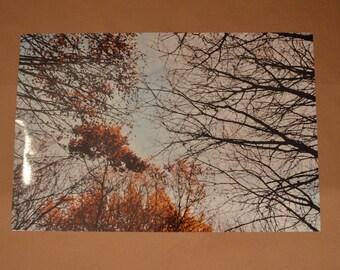 photo arbre couleur jack and sirius