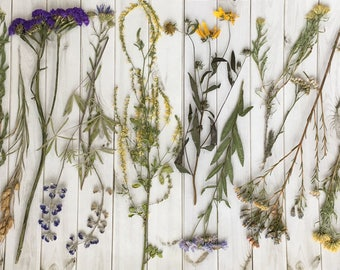 Pressed wildflowers pressed flower mix wildflower collection real flowers pressed craft project flowers cottage mix pressed flowers real