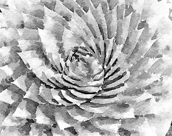 Black and White Succulent ~ Watercolor ~ Succulent Print