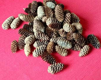 """12 Scented White Spruce Pine Cones, 2-3"""", Natural Pine Cones, Wedding Decor Fall or Winter Decorations Crafts Wreaths Ornaments Potpourri"""