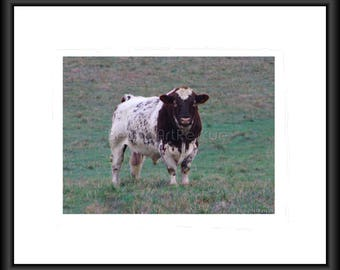 Bull, Photography, Free Shipping, Print, Framed Print, Canvas Wrap, Canvas with Floating Frame, Wall Art, Home Decor, Nature Pic,