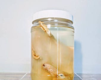 Preserved Duck - Wet Specimen - Leg Deformity - Oddities - Taxidermy