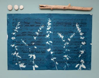 "Original cyanotype ""Cat mint"" on old, double-sided sheets of music"