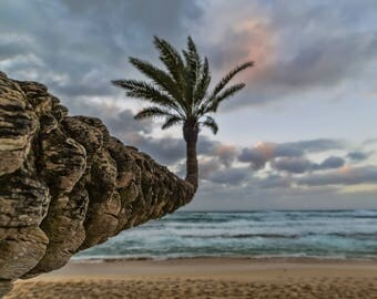 Photography Print- Landscape, Nature, Palm Tree at Sunset Beach on the North Shore of Oahu, Hawaii