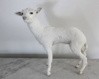Vintage Taxidermy Goat, Taxidermy Baby Goat, Taxidermy Kid Goat, Jeanne D'arc Living, Nordic Decor