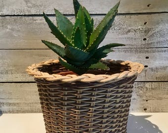 Retro Woven Wicker and Plastic Pot Plant Basket | Boho Decor