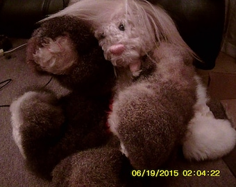 Mournful Mindy (winged possum fur teddy-style cat)