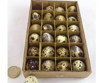 24 Empty Quail eggs - birds - taxidermy - home decoratioen - easter
