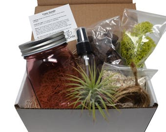 8pcs DIY Air Plant Terrarium Kit / Gift Box / Pink Mason Jar / Air Plant / Coral Sand / Moss / Home Decor / Gifts / DIY Project