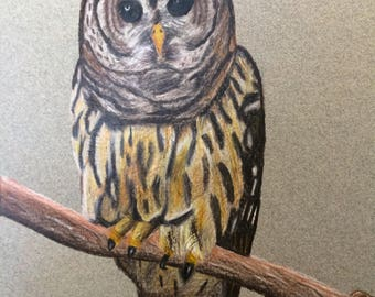 Owl Drawing Colored Pencil