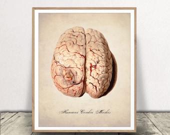 PRINTABLE HUMAN BRAIN, Human Anatomy, Anatomy Art Print, Human Brain Illustration, Human Anatomy, Brain Pathology, Human Anatomy Download
