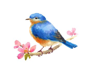 Bluebird On Cherry Blossoms Branch Watercolour Painting Q11